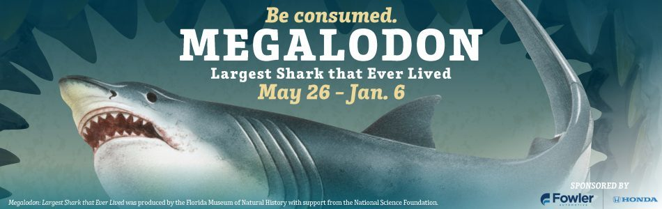 Book in search of megalodon